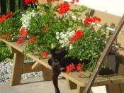 Unser-Katze