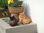 Unsere-Katzen